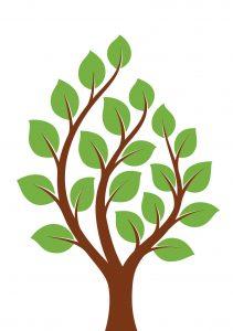 עץ משפחתי אזרחות פורטוגלית