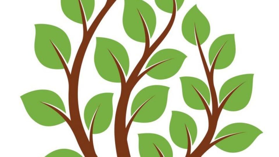 עץ משפחת אזרחות פורטוגלית